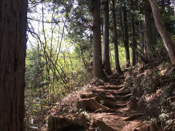 御岳山の山道