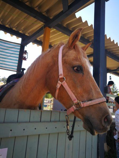 チロルの森の馬