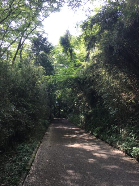 箱根の道路