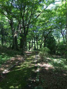九頭龍の森の道