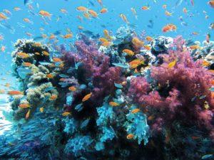 きれいな海の中のサンゴと熱帯魚