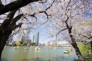 上野公園不忍池のお花見